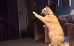 【泣いた】仲良しだった犬が亡くなった後、猫の行動が・・・