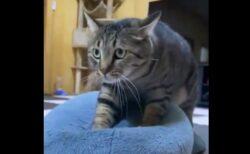 【w】落雷の音がこわくてひたすらふみふみしてる猫が話題に「目が真剣w」