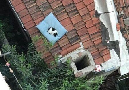 【w】誤って窓から落とした犬の布団、数日後 窓の下を見たらねこの布団に・・