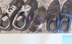 【ちょこん】玄関が好きな猫達が話題にw