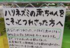 【泣いた】ハリネズミの赤ちゃんを誘拐されたペットショップの貼り紙が話題に