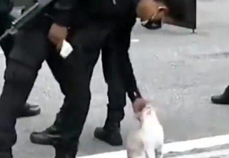 【w】どうしても猫を撫でたい勤務中の警察官、こそこそ撫でまくるw