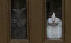 (ΦωΦ) (ΦωΦ) 帰宅する飼い主を出迎える2匹の猫!ものすごい圧が話題にw