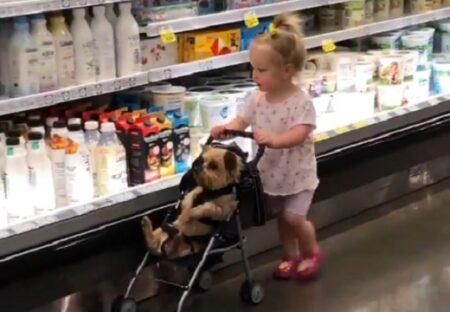 スーパーでベビーカーを押す女児と、ベビーカーに座り付き合う犬が話題にw