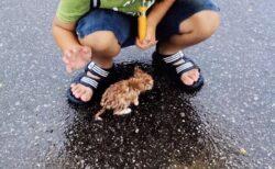 【泣いた】雨のなか子猫を拾った男児、10年後の2人の姿が話題に