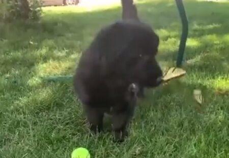 【動画】子犬と遊びたい2匹のちょうちょが話題に「映画みたい」「メルヘンの世界」