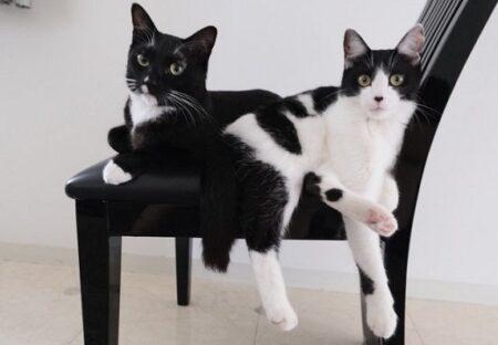 藤あや子さん、目標フォロワー数達成記念に猫の腎臓病治療薬研究に寄付。金額が凄い!
