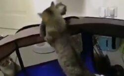 【泣いた】授乳しながら子猫達に気を配るママ猫、落ちそうになる子を必死にキャッチ