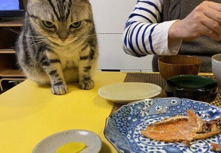 (ΦωΦ) 食卓の魚をじっと見つめる猫が話題に「すごい狙いっぷりw」