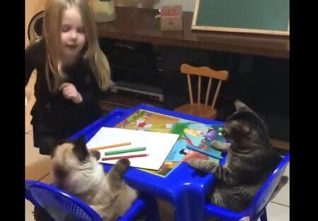 美少女と猫2匹の先生ごっこが話題「全てが可愛いすぎ!」「わけわからん可愛さ」