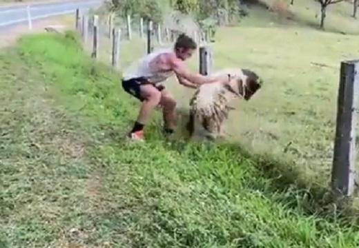 【動画】 筋肉隆々のイケメン、羊を救助する様子が最後までかっこよすぎる
