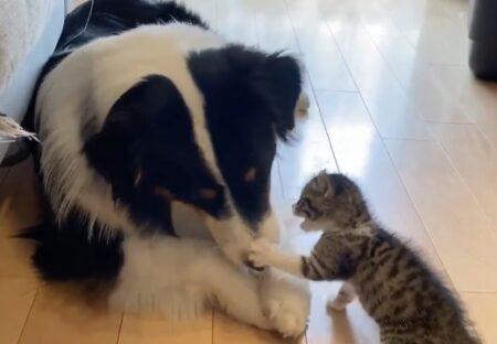 【w】モグモグする犬の口が気になる子猫とぜったい見せない大型犬。可愛いすぎ!