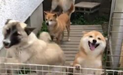 【わちゃわちゃ】犬の柵を外してみたら‥の動画が話題「すっごい幸せそう」「羨ましい」
