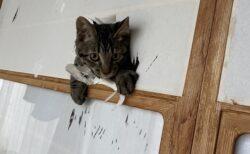 【画像たくさん】猫、子猫に破られまくる障子が話題にw