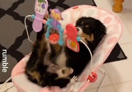【居ない隙に・・】赤ちゃん用のベッドに寝そべり夢中で遊ぶ犬が話題にw