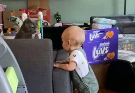 【動画】赤ちゃんにとつぜん号泣された猫、困惑の表情が話題にw