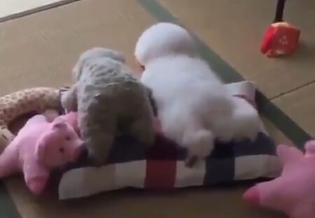 【動画】ぬいぐるみになりきってる犬が話題に「後ろ足が可愛いすぎるw」