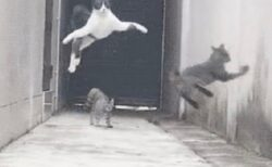 【爆笑】不良に囲まれて華麗に逃げる猫が話題に「瞬発力すごすぎw」「忍者みたい!」