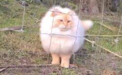 【えっ】ネットを通過できちゃうふわふわ猫が話題に「ターミネーター2で見た!」