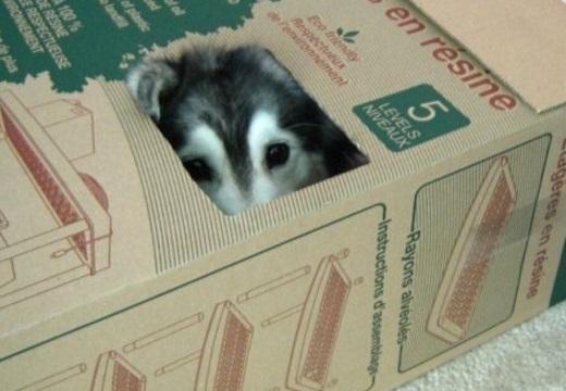【w】猫に育てられた犬が話題に「猫の座り方してる!」「眼差しまで猫!可愛すぎw」
