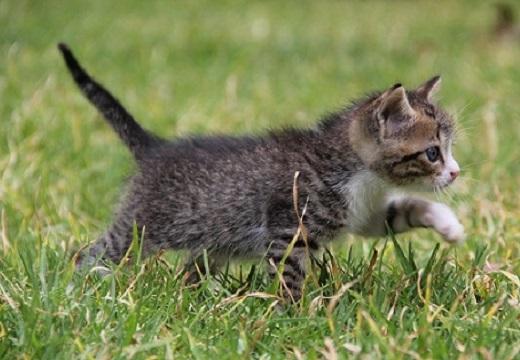 【動画】ちっさすぎる子猫のかわいい握手会!いつまでも見ていられるw