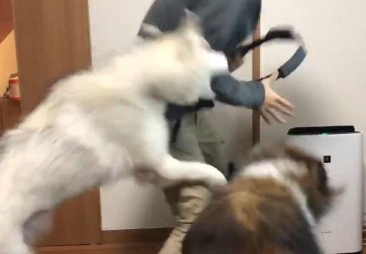 【大騒ぎ】リングフィットを全力で楽しむ大型犬2匹と飼い主さんが話題にw