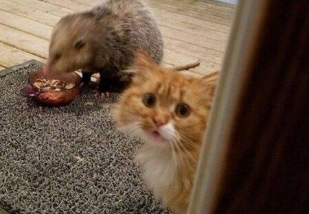 【悲壮感】目の前でごはんを野ねずみに食べられちゃってる猫、すごい表情が話題にw