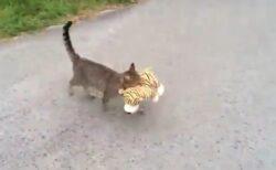 【w】尻尾るんるんでぬいぐるみを運ぶ猫。こっそりついて行ってみたら・・