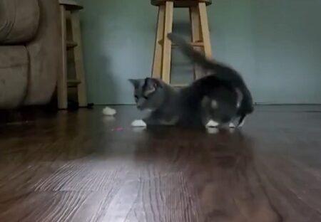【爆笑】レーザーポインターを追う猫達、ものすごいスピードが話題にw