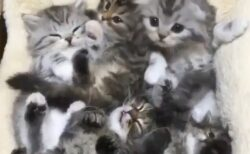 【何匹いるの?!】子猫がぎゅうぎゅうのかご。こんな天国に埋もれたいw