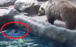 【・(ェ)・】溺れるカラスに気づいたクマが話題にw ネット&カラス「食われると思った」