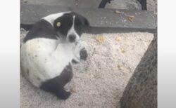【泣いた】行方不明の愛犬を3年間探し続けたおじいさん、無事再会