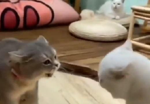 (ΦωΦ)(ΦωΦ) 猫同士の口ゲンカが話題に「奥の猫の表情がw」