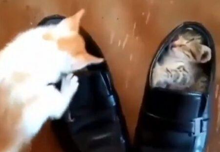 【動画】靴の中にすっぽりすやすや眠る子猫と、真似したい子猫、どっちも可愛いw