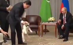 【愛犬家】首根っこを掴まれる子犬を見たプーチン大統領の行動が話題に