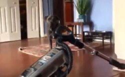【w】高い柵を軽々飛び越える犬。代わりに掃除機を置いみたら・・・「表情(笑」