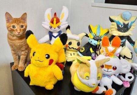 【ちょこん】猫がいなくて探してたらぬいぐるみ集団の中に・・・w