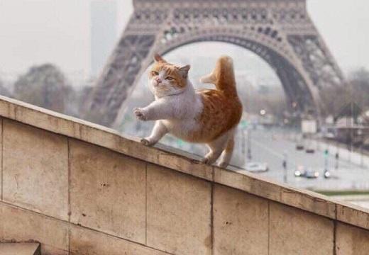 (ΦωΦ) エッフェル塔を背にルンルンで歩く猫、めちゃくちゃ可愛い!