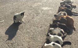 【w】猫先生と一列に並んだたくさんの猫、可愛いすぎる写真が話題に