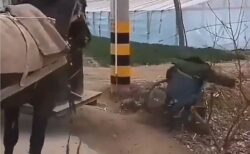 【感動】目の前の車椅子が転倒!馬がとった行動が話題に