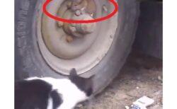 【動画】必死に探す猫と必死に固まるねずみ、まるでトムジェリw