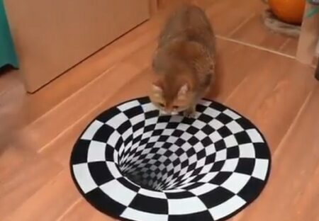 【!?】異次元への入口に戸惑う猫がカワイイw