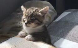 【たまらん】睡魔と戦う子猫、可愛いすぎるw