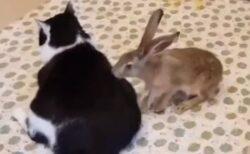 【タタタタタタ】仲良しな猫とうさぎ、見てるだけで癒される(・∀・)